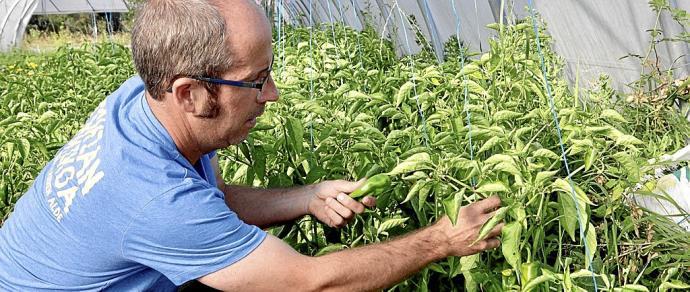 red semillas Euskadi Hazien Sarea
